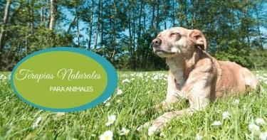curso terapias naturales para animales