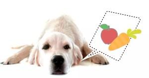es bueno dar comida casera al perro