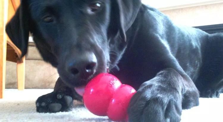 juguetes kong perros