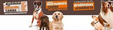 educadores caninos profesionales e-dog