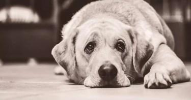 el perro aburrido