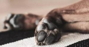 patitas de tu perro