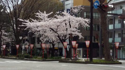 Les rues de la ville au couleurs d'Hanami avec de jolies lanternes qui éclairent les allées à la nuit tombée.