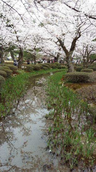 La vue depuis l' Hanami-bashi