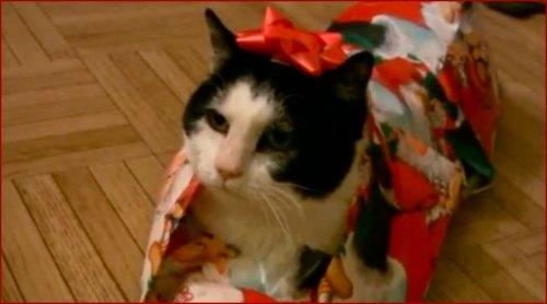 Comment emballer un chat pour Noël
