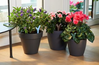 Ama i fiori ma si dimentica di annaffiarli? Regalale una pianta fiorita con il dispositivo Parrot Flower Power: ti avvisa lui quando è il momento di dare da bere alla piantina!