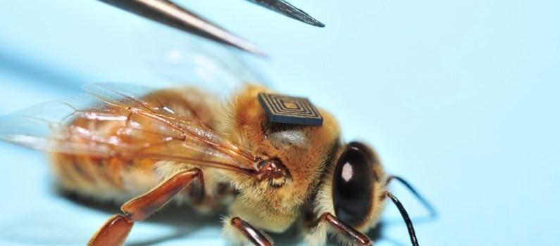Microsensores de Intel serán colocados en abejas