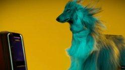 Sony estudio de Perros