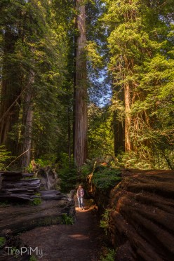 tropimy-star-wars-return-of-the-jedi-redwood-3