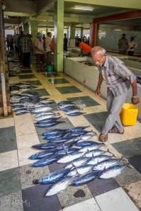 Targ rybny w Male