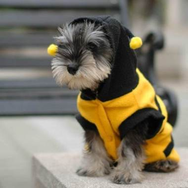 costumes-chien-halloween-10