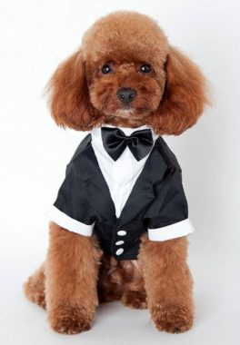 costumes-chien-halloween-13