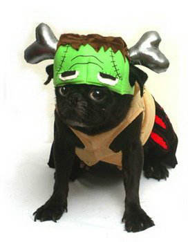 costumes-chien-halloween-4