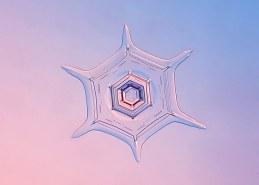 Entry_19850_snowflake-20100103-01