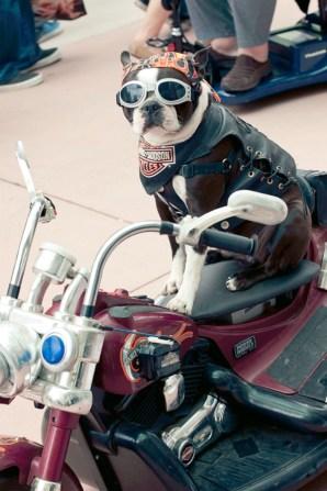 Harley Dog - Hayley Sargent - San Diego Comic-Con 2012