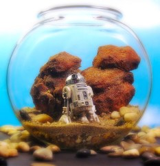 star_wars_terrarium_tattooine