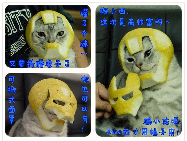 iron-man-cat1