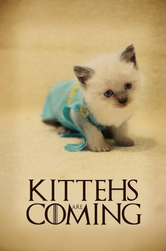 Dany kitteh 2