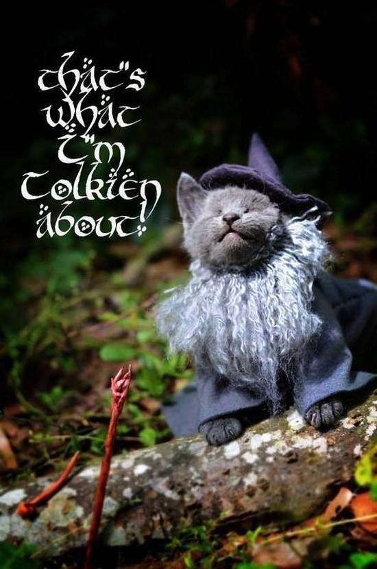 Gandalf kitteh 2
