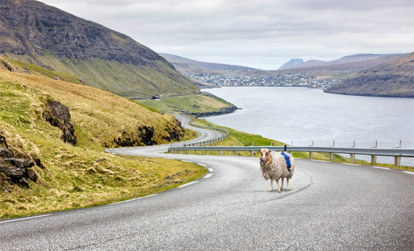 Sheep mounted with cameras are mapping the Faroe Islands, because Google hasn't