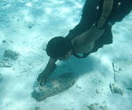 Diver touching unexploded bomb on ocean floor