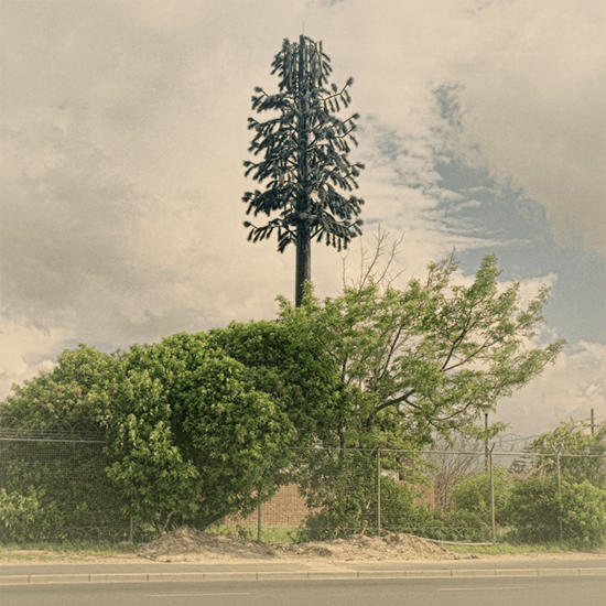 South African cellphone tower disguised as a tree