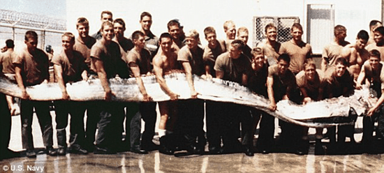 U.S. Navy shows off a giant oarfish