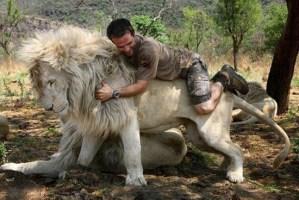 Man rides white lion