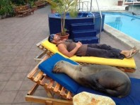 Seal sleeping on lounger
