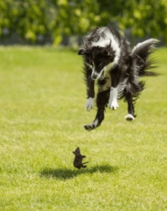Cute well-timed photo - dog and mouse scare each other