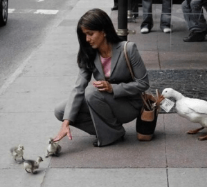 Duck snatching money out of lady's purse