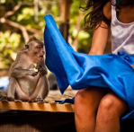 Monkey looks up woman's dress