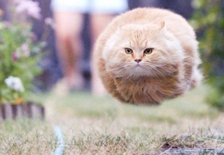 Well-timed photo makes cat in mid-air look like it has no legs