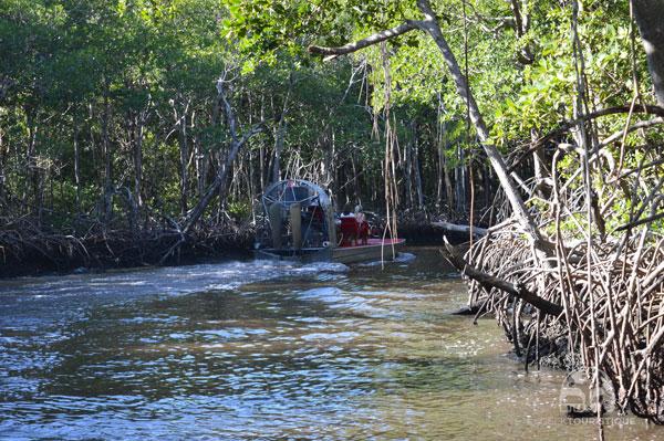 Everglades-9