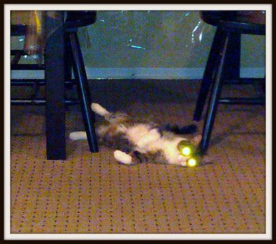 POD: Evil Cat?