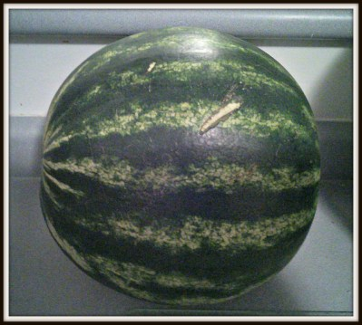 POD: First Watermelon 2014