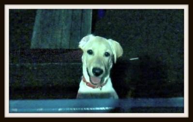 POD: Cute Puppy