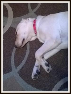 POD: Sleeping dog