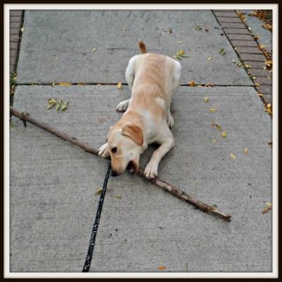 POD: Rubys Small Stick