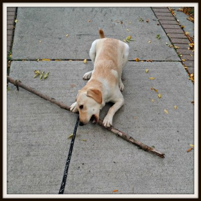 POD: Rubys Small Stick