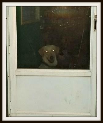 POD: Waiting Ruby