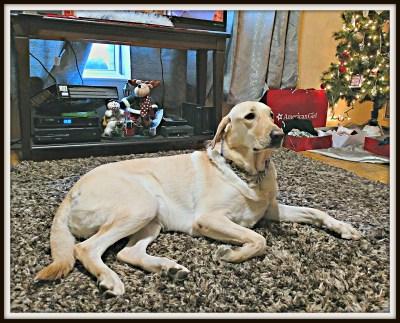 POD: Pretty Doggy