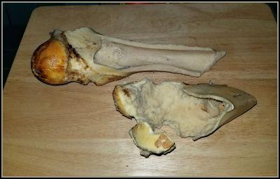 POD: Once Might Dino Bone