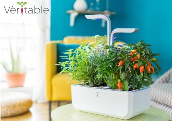 indoor gardening vegetables year round Veritable Autonomous Indoor Garden Lets You Grow Herbs And