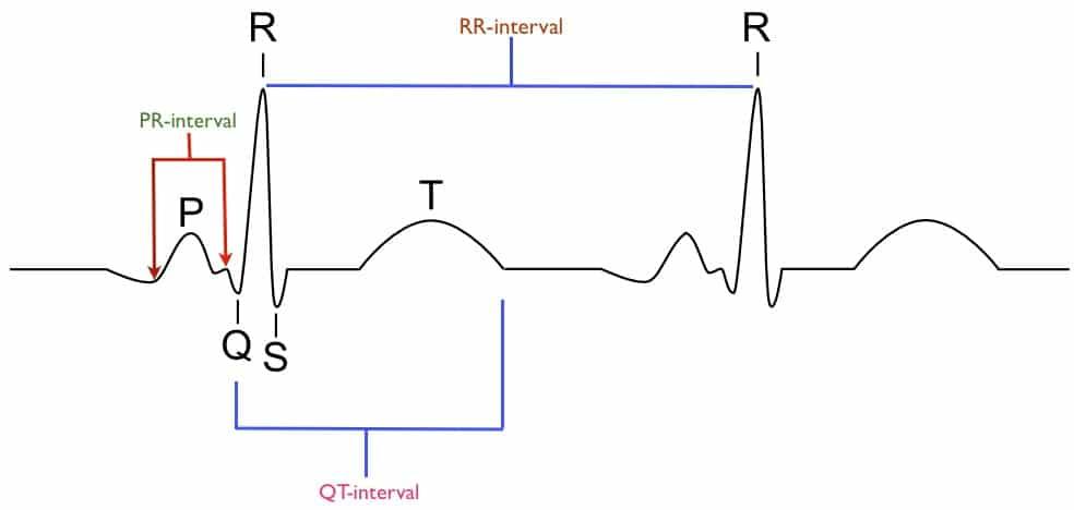 The Mammalian Heart