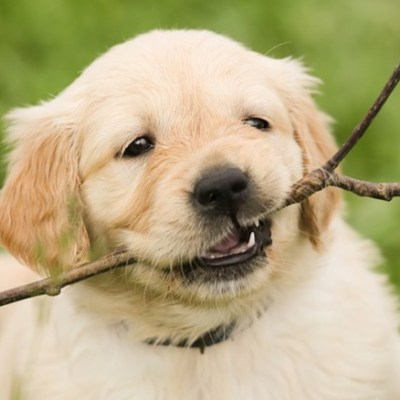 Puppy Advies Lijn