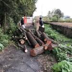 鴻巣アートの森「電線に触れる大木の枝を伐採しました!」