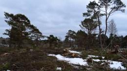 ANLEGGSARBEIDET STARTER: Skogen er hugd og i mai starter arbeidet med å bygge vei inn til det nye hyttefeltet på Alveberget mellom Bjelland og Alvekilen. Foto: Esben Holm Eskelund