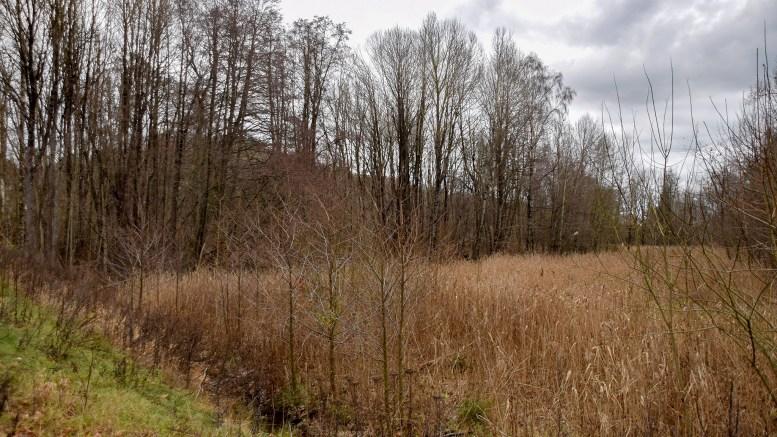 GJENGRODD: Raet Nasjonalparkstyre gir Tromøy Frivillligsentrals dugnadsgruppe tillatelse til å gjenskape en tilgrodd tursti fra Flangeborg til Nerte. Foto: Esben Holm Eskelund