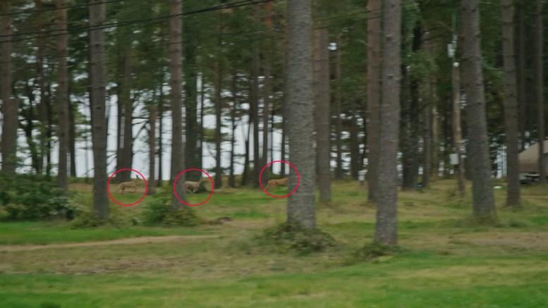 RÅDYR-OPPLEVELSE: TV-programmet «Gift ved første blikk» fanget opp rådyr i vilt sprang over Canvas Hove på Hoveodden. Foto: Dplay/Montasje